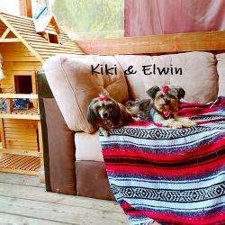 Kiki & Elwin * Morkie *